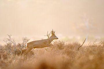 Springende ree van Andy van der Steen - Fotografie