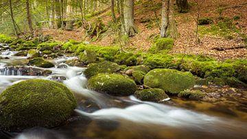 Bezaubernder Bach im Wald von Tobias Luxberg