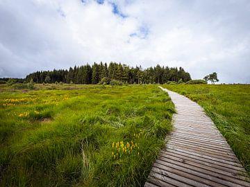 Promenade in Richtung des Waldes von OCEANVOLTA