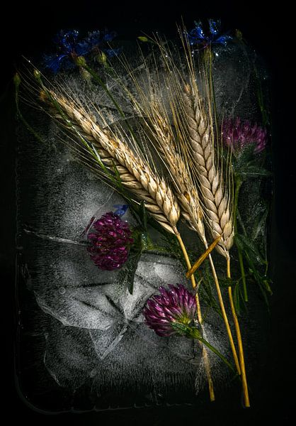 Flowers In The Ice von Thilo Wagner