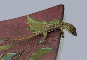 Gekko - Gecko von Gonnie van Hove