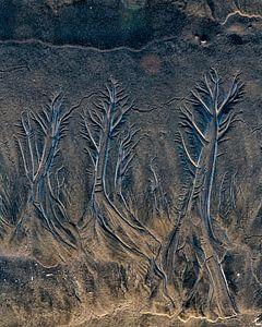 Bomen uit het zand.