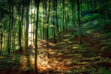 Zauberwälder von Rik Verslype