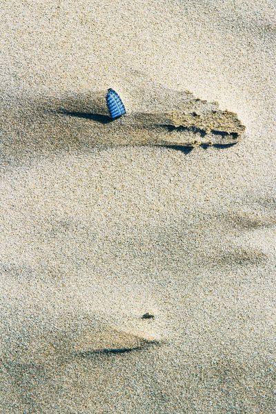 Schelp op het strand van Sanneke Kortbeek