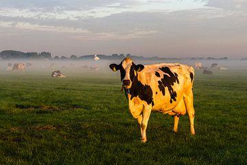 Weideland met koe bij Simonshaven van René Groenendijk
