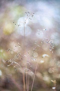L'herbe d'été sur Dennis Claessens