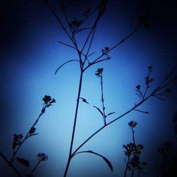 twiggy 02 von poetic snapshots