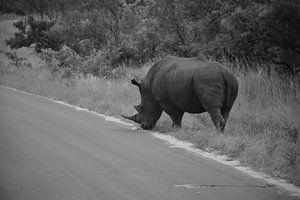 Neushoorn mannetje in het Kruger Park, Zuid Afrika van Rebecca Dingemanse
