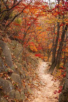 Straße zwischen Bäumen und Felsen von Mickéle Godderis