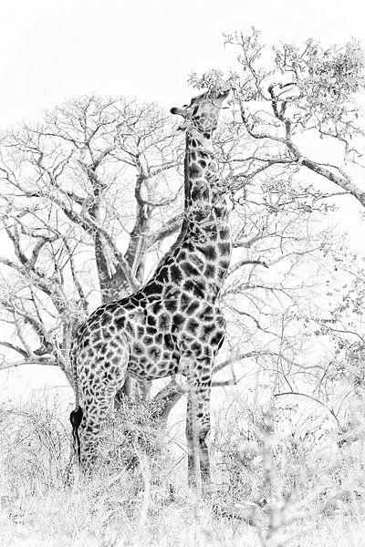 Klassieke giraffe in zwart wit van Heleen van de Ven