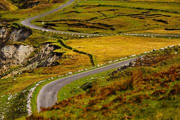 Ierland - Mayo - Achill Island - kronkelende weg van Meleah Fotografie
