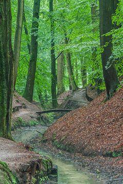 Bruggetje in het bos van Michel Knikker