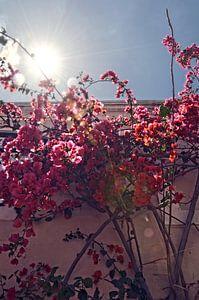 Bloemen in de zon van
