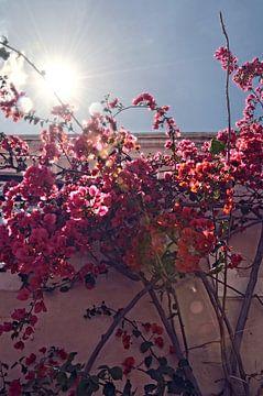 Lissabon - bloemen von Kramers Photo