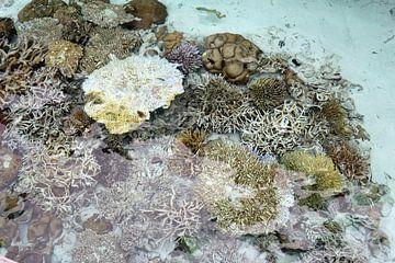 koraal van Wilma Hage