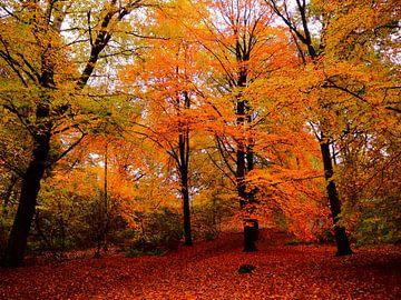 Herfst in het Bos van Daan van Gils