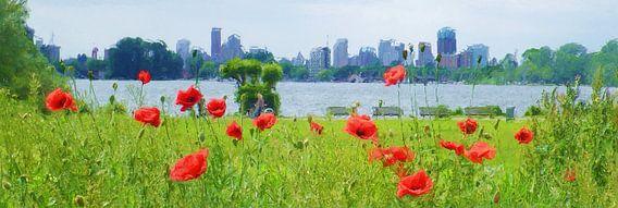 Rotterdam Poppyfields