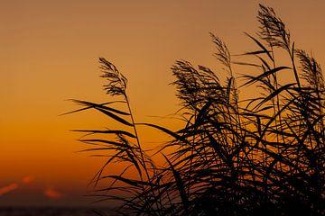 riet pluimen bij zonsondergang van Laura Weijzig