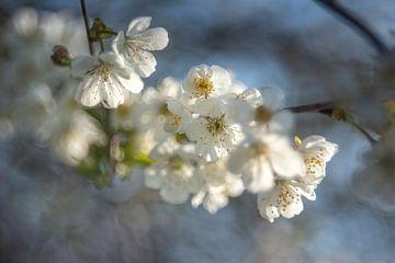Blossom von Christl Deckx