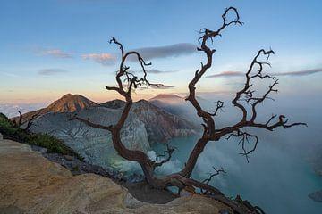 Ein alter Baum über dem See des Vulkans Ijen in Ost-Java von Anges van der Logt