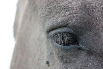 Close up paarden oog von Saskia Hoks