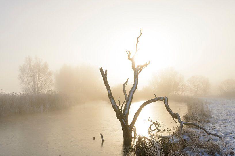 Dode boom in de winter van Sjoerd van der Wal