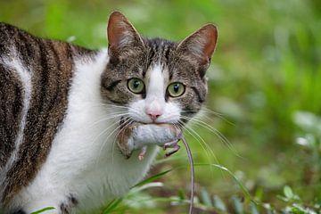 kat en muis van Dirk Rüter