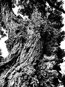 Tree Magic 88