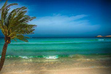 romantisch e azuren zee met palmboom