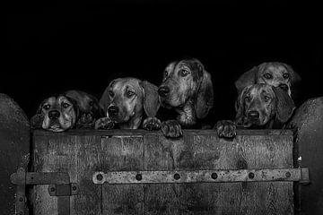 Neugierige Hunde über die Kante der Holztür von Caroline van der Vecht