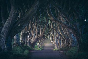 Irland Dark Hedges im ersten Licht von Jean Claude Castor