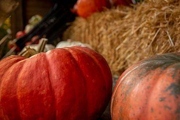 Pumpkins for sale van Stefan Heesch