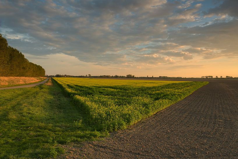 Zonsondergang in de polder aan Koolzaad weiland van Colorful Compositions