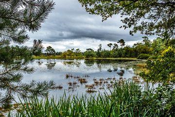 Doorkijkje op het Leersumse veld von Ron van Ewijk