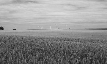 Windmühlen von MSP Canvas