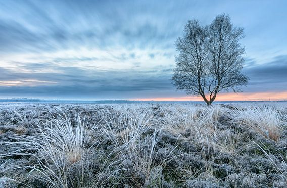 Winterse Ginkelse Heide van Sander Grefte