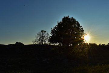 Sonnenuntergang in Schweden von Naomi Elshoff