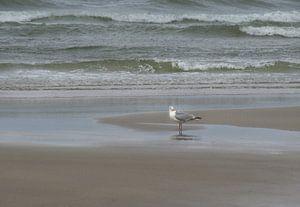 Moewe am Strand von