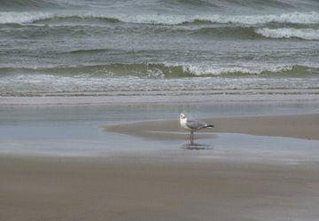 Moewe am Strand