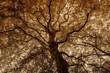 majestueuze boom in duotoon van Hanneke Luit
