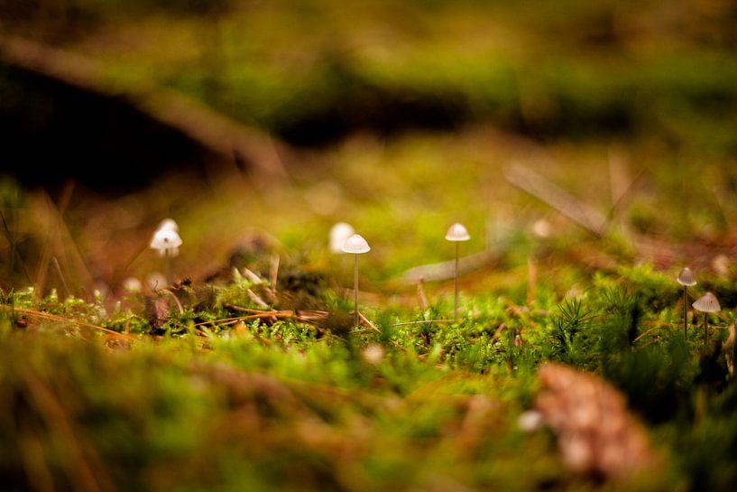 Paddestoelen in het bos van Melanie Schat