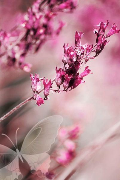 ROSE SPANGLES no1C-Butterfly van Pia Schneider
