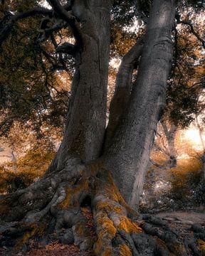 Tree of magic van Thomas Jansen