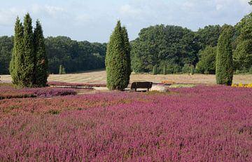 Heidegarten ,  Schneverdingen, Lüneburger Heide