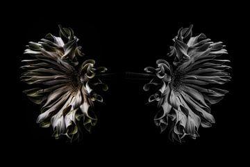 Die Reflexion der Blume