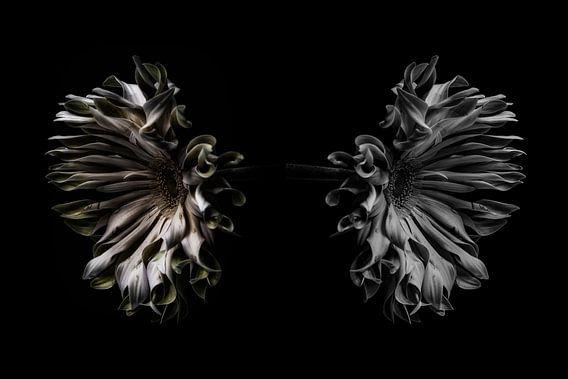De weerspiegeling van de bloem