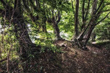 Bäume mit Geschichte von Rob Boon