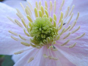 Flower sur Eugene Klinkenberg
