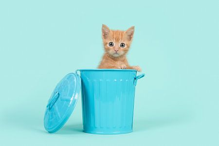Rood kitten in het blauw / Red ginger 8 weeks old baby cat in a blue dustbin on a turquoise