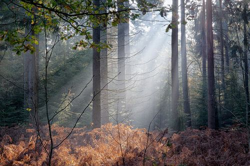 Zonnestralen in herfstbos